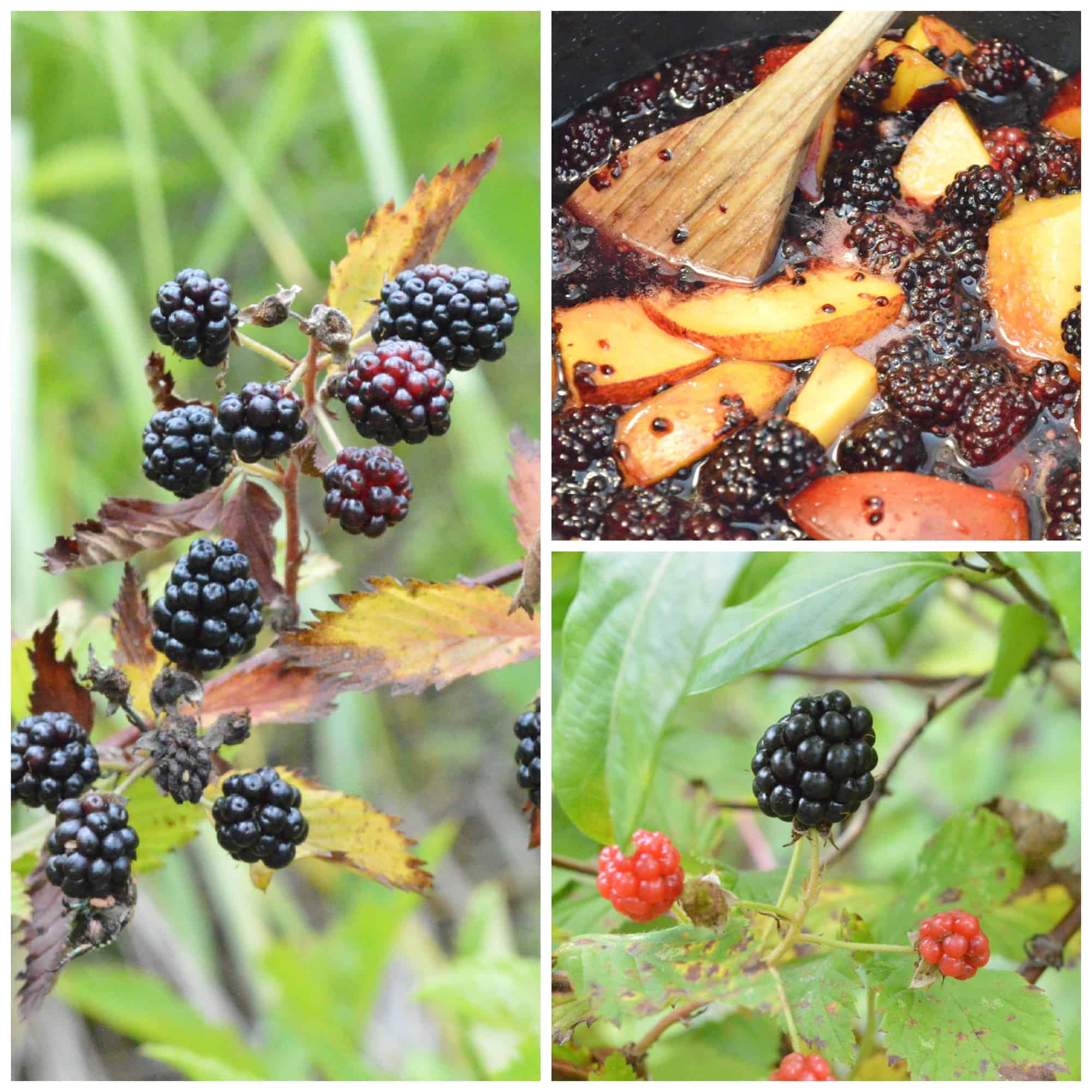 Blackberry Collage