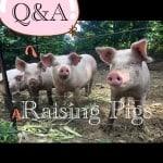 Homestead Blog Hop #14