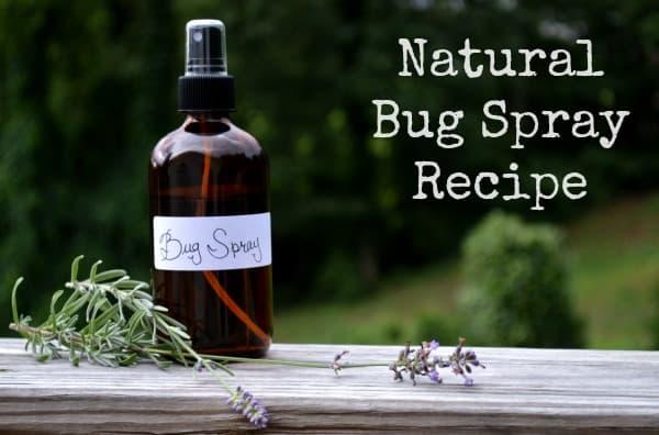 bug spray infographic