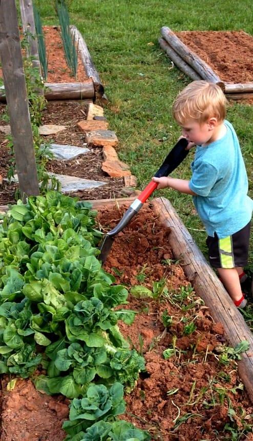 working garden beds