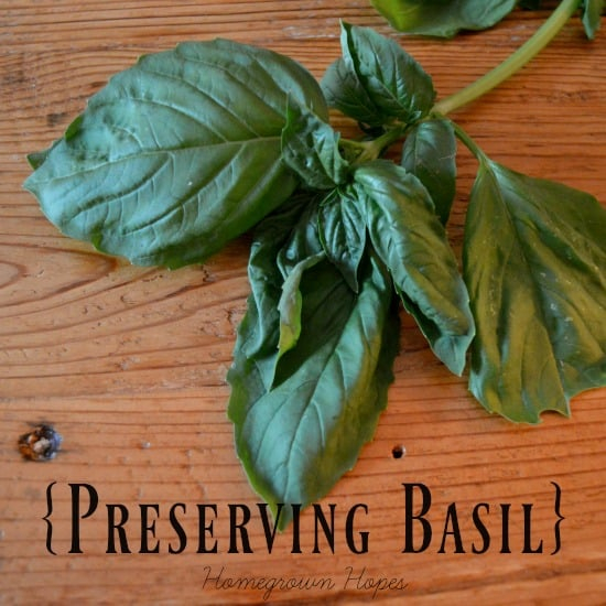 preserving-basil-infographic